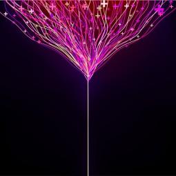 800x800 pinklines